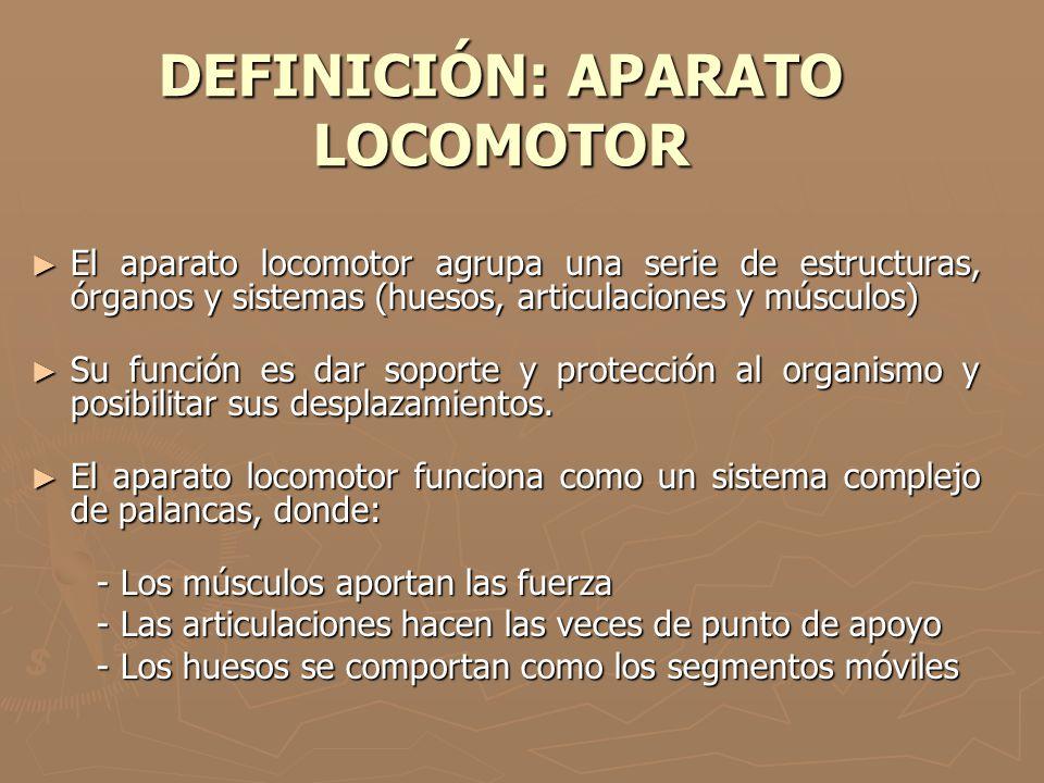 DEFINICIÓN: APARATO LOCOMOTOR El aparato locomotor agrupa una serie de estructuras, órganos y sistemas (huesos, articulaciones y músculos) El aparato