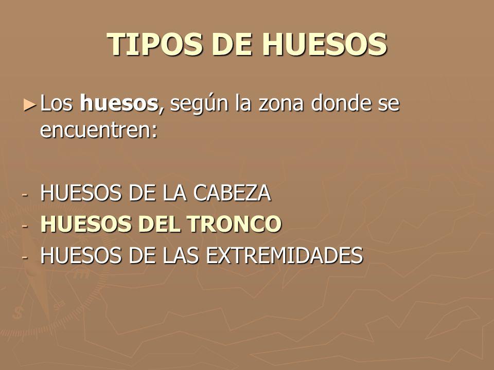 TIPOS DE HUESOS Los huesos, según la zona donde se encuentren: Los huesos, según la zona donde se encuentren: - HUESOS DE LA CABEZA - HUESOS DEL TRONC