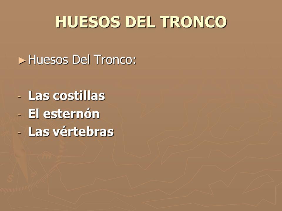 HUESOS DEL TRONCO Huesos Del Tronco: Huesos Del Tronco: - Las costillas - El esternón - Las vértebras
