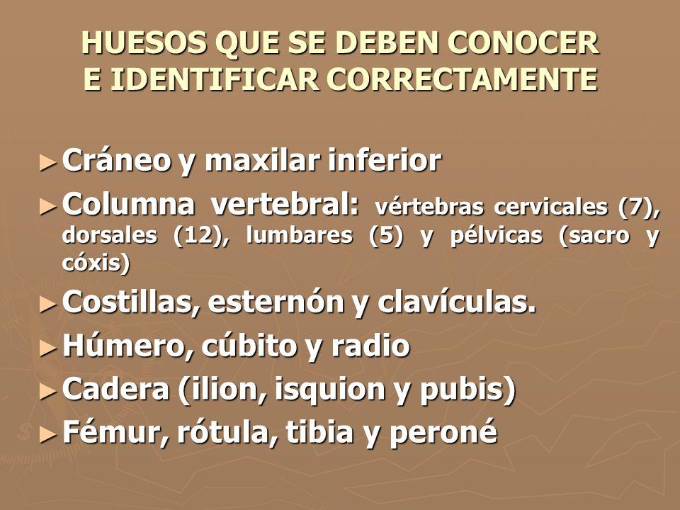 HUESOS QUE SE DEBEN CONOCER E IDENTIFICAR CORRECTAMENTE Cráneo y maxilar inferior Cráneo y maxilar inferior Columna vertebral: vértebras cervicales (7