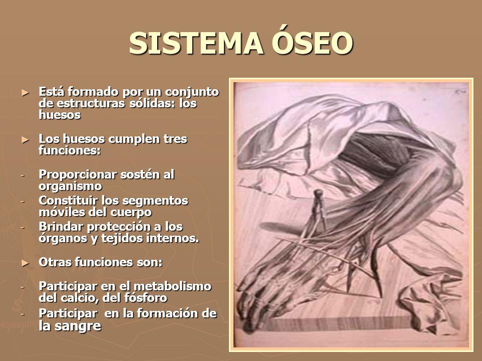 SISTEMA ÓSEO Está formado por un conjunto de estructuras sólidas: los huesos Está formado por un conjunto de estructuras sólidas: los huesos Los hueso