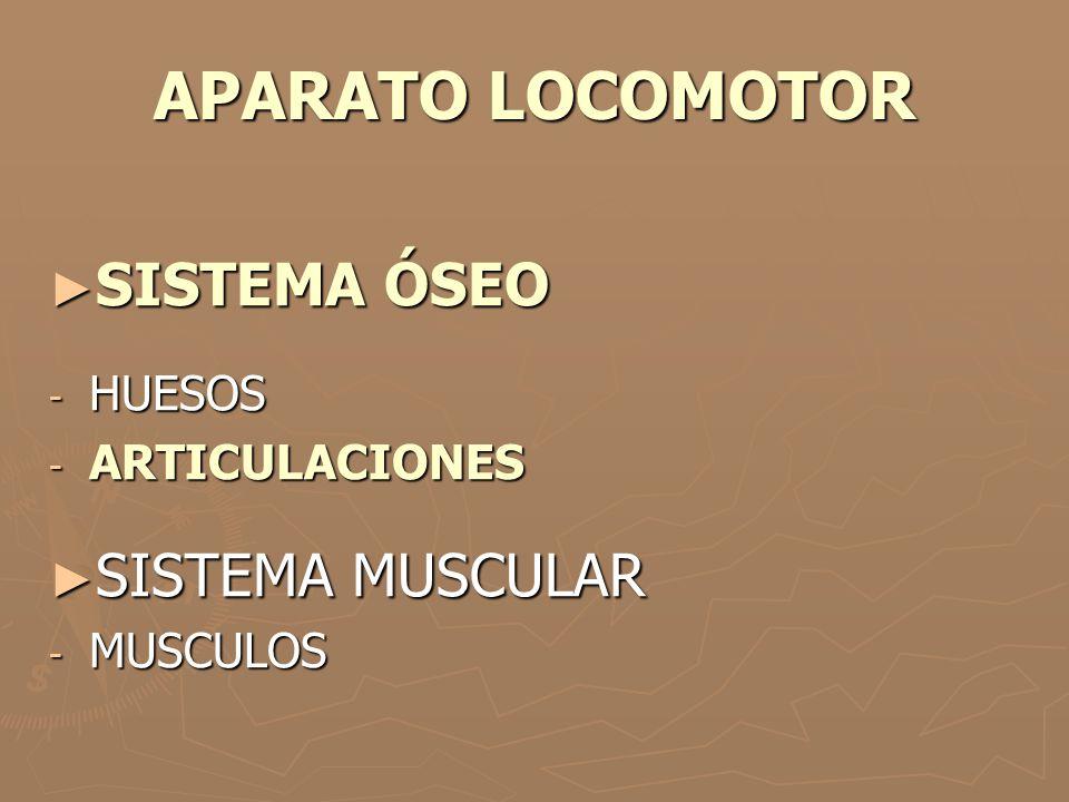 APARATO LOCOMOTOR SISTEMA ÓSEO SISTEMA ÓSEO - HUESOS - ARTICULACIONES SISTEMA MUSCULAR SISTEMA MUSCULAR - MUSCULOS