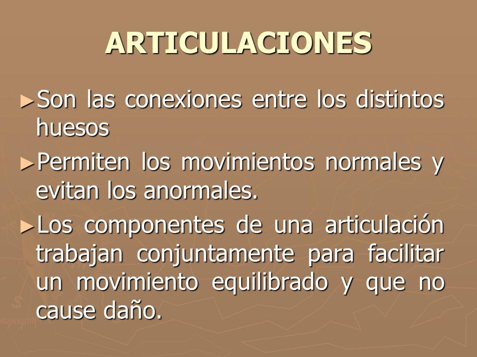 ARTICULACIONES Son las conexiones entre los distintos huesos Son las conexiones entre los distintos huesos Permiten los movimientos normales y evitan