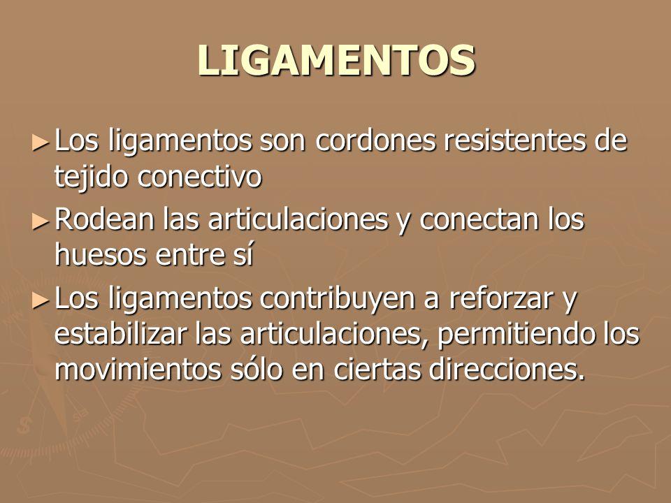LIGAMENTOS Los ligamentos son cordones resistentes de tejido conectivo Los ligamentos son cordones resistentes de tejido conectivo Rodean las articula