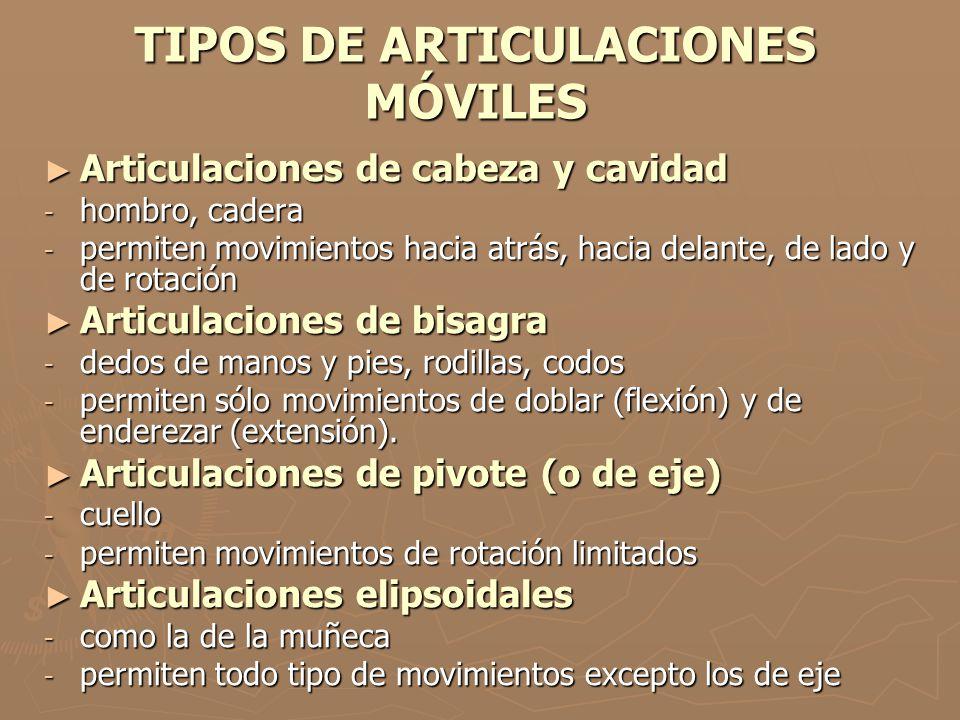 TIPOS DE ARTICULACIONES MÓVILES Articulaciones de cabeza y cavidad Articulaciones de cabeza y cavidad - hombro, cadera - permiten movimientos hacia at