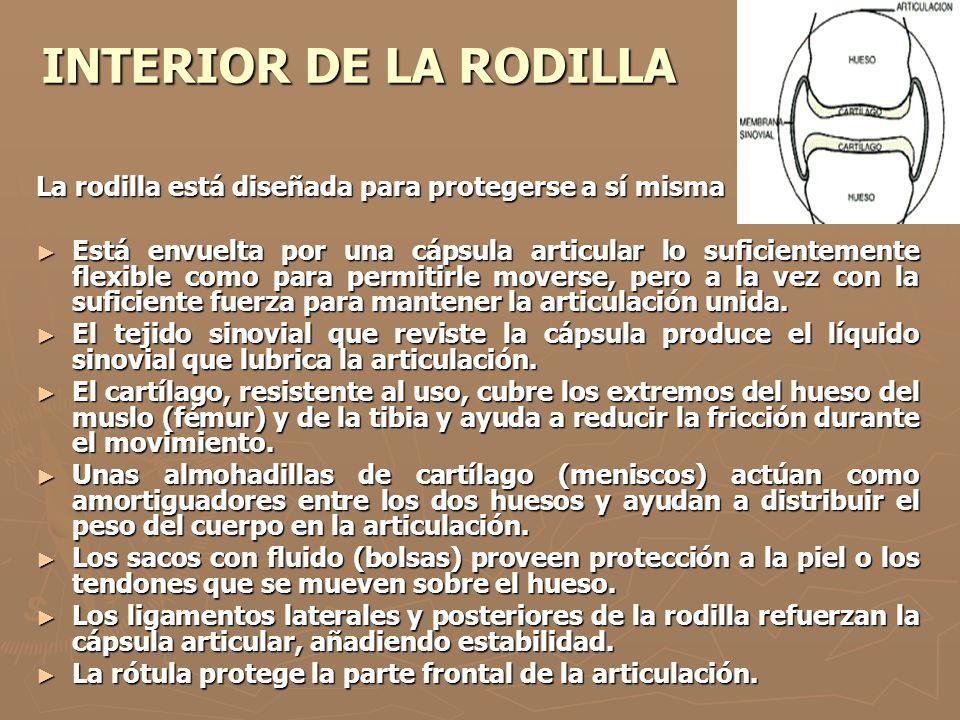 INTERIOR DE LA RODILLA La rodilla está diseñada para protegerse a sí misma Está envuelta por una cápsula articular lo suficientemente flexible como pa
