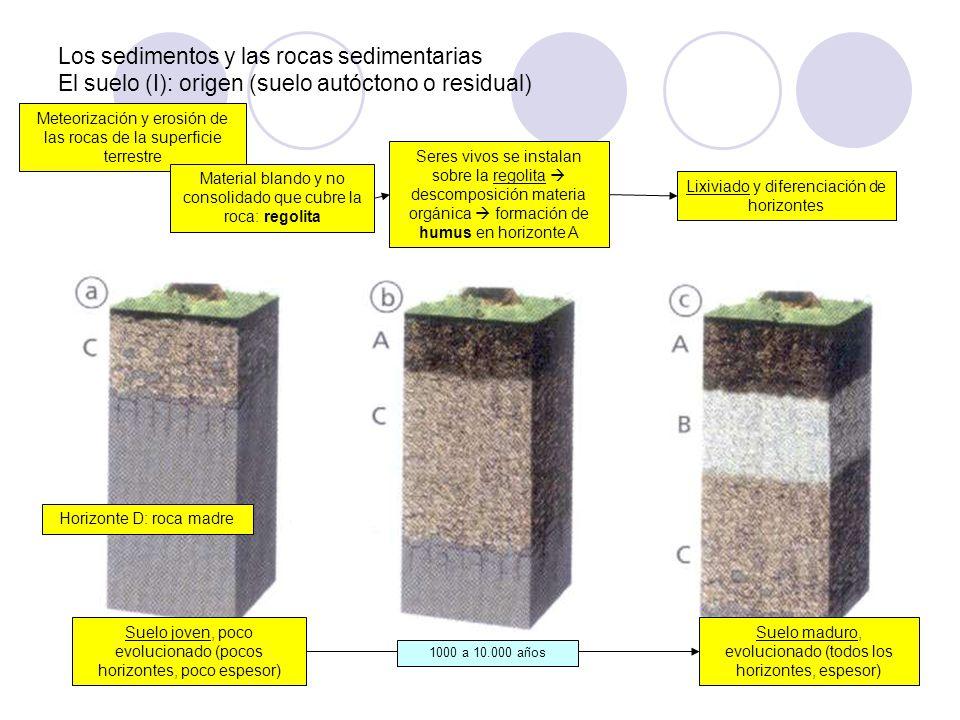 Los sedimentos y las rocas sedimentarias El suelo (I): origen (suelo autóctono o residual) Meteorización y erosión de las rocas de la superficie terre