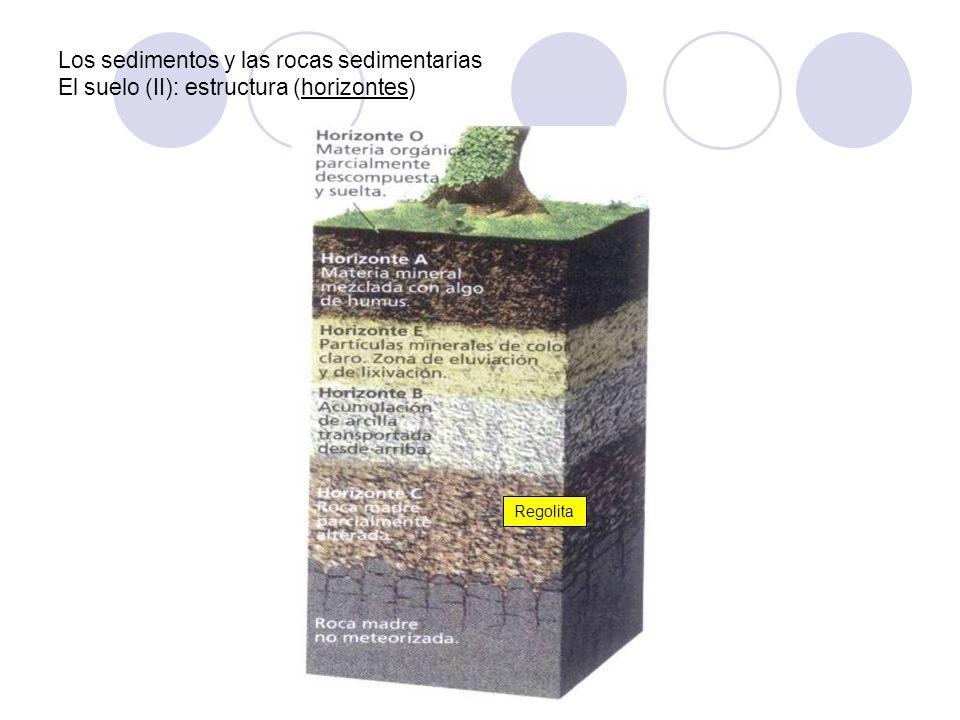 Los sedimentos y las rocas sedimentarias El suelo (II): estructura (horizontes) Regolita
