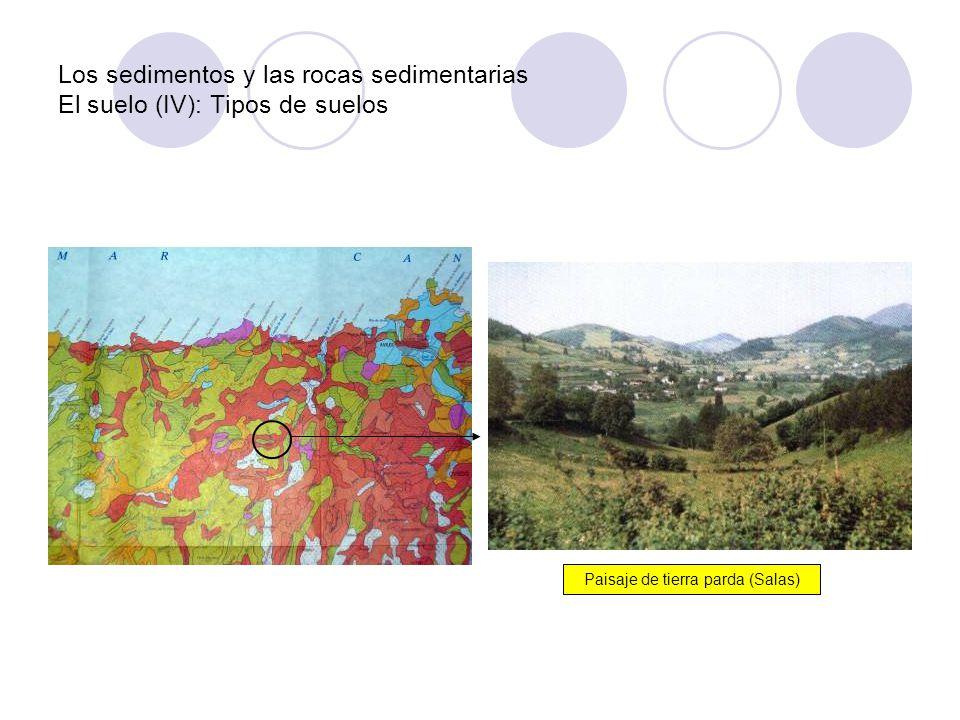Los sedimentos y las rocas sedimentarias El suelo (IV): Tipos de suelos Paisaje de tierra parda (Salas)