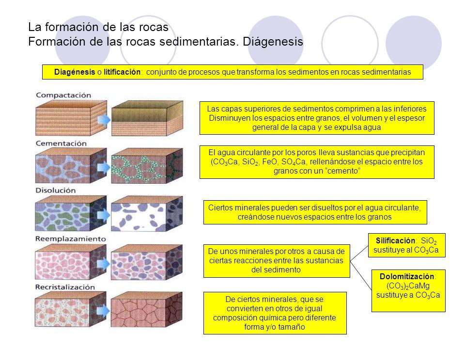La formación de las rocas Formación de las rocas sedimentarias. Diágenesis Diagénesis o litificación: conjunto de procesos que transforma los sediment