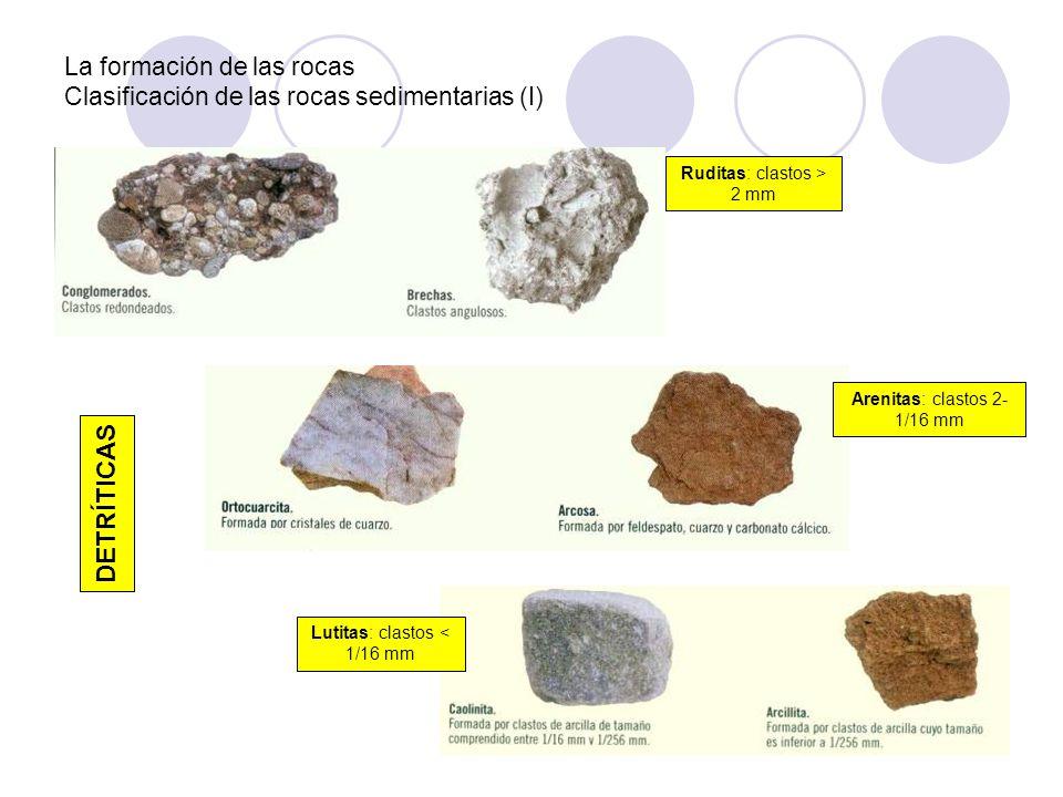 La formación de las rocas Clasificación de las rocas sedimentarias (I) Ruditas: clastos > 2 mm Arenitas: clastos 2- 1/16 mm Lutitas: clastos < 1/16 mm
