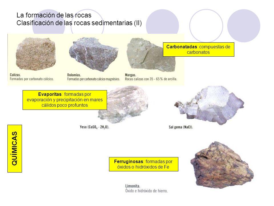 La formación de las rocas Clasificación de las rocas sedimentarias (II) Carbonatadas: compuestas de carbonatos QUÍMICAS Evaporitas: formadas por evapo