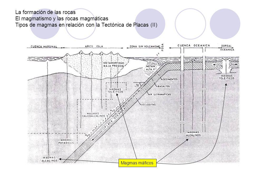 La formación de las rocas Clasificación de las rocas sedimentarias (III) ORGANÓGENAS Silíceas: formadas por acumulación de esqueletos de protistas unicelulares marinos Calizas bioquímicas: formadas por acumulación de esqueletos calcáreos de corales o moluscos (conchas) Carbones y petróleo: formados por descomposición de restos vegetales terrestres (carbón) o de plancton marino (petróleo)