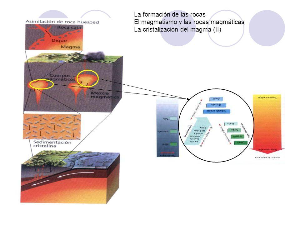 La formación de las rocas El magmatismo y las rocas magmáticas La cristalización del magma (II) Fases de la consolidación magmática Fase ortomagmática: 1200 - 800 ºC.