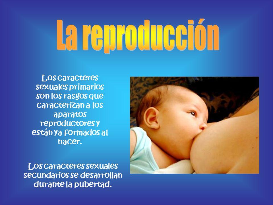 Los caracteres sexuales primarios son los rasgos que caracterizan a los aparatos reproductores y están ya formados al nacer. Los caracteres sexuales s