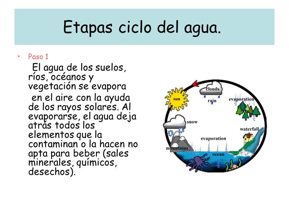 Etapas ciclo del agua. Paso 1 El agua de los suelos, ríos, océanos y vegetación se evapora en el aire con la ayuda de los rayos solares. Al evaporarse