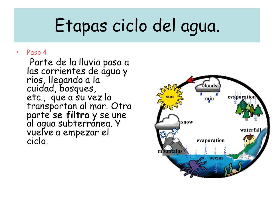 Etapas ciclo del agua. Paso 4 Parte de la lluvia pasa a las corrientes de agua y ríos, llegando a la cuidad, bosques, etc., que a su vez la transporta