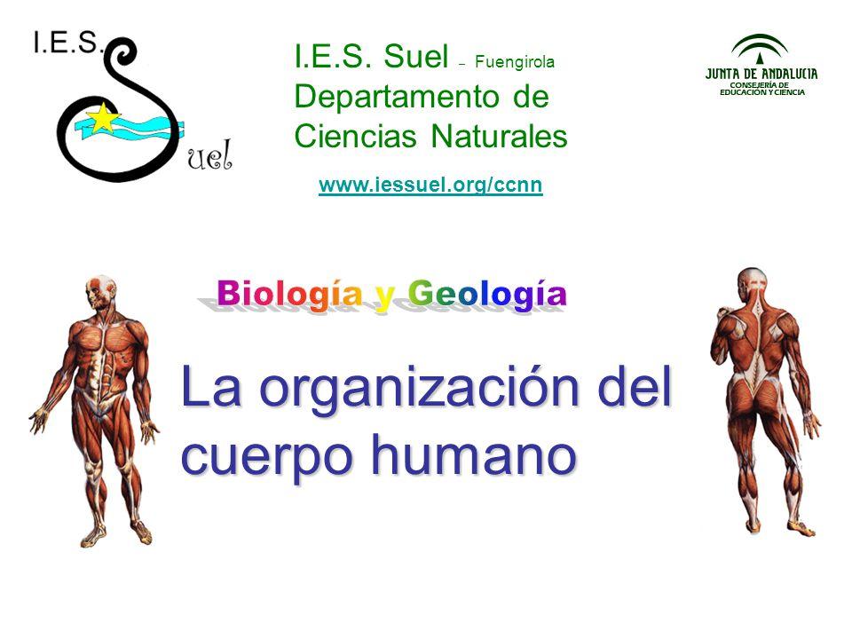 I.E.S. Suel – Fuengirola Departamento de Ciencias Naturales La organización del cuerpo humano www.iessuel.org/ccnn