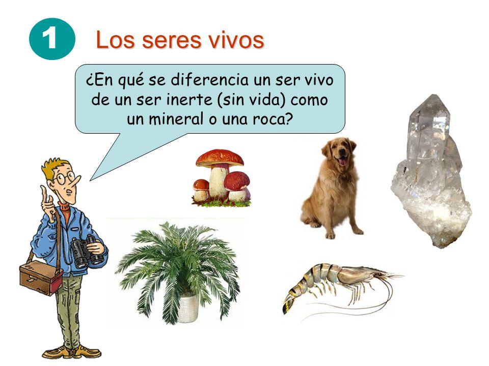 1 Los seres vivos ¿En qué se diferencia un ser vivo de un ser inerte (sin vida) como un mineral o una roca?