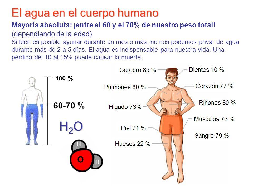 El agua en el cuerpo humano El agua en el cuerpo humano Mayoría absoluta: ¡entre el 60 y el 70% de nuestro peso total! (dependiendo de la edad) Si bie