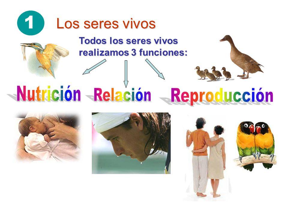 1 Los seres vivos Todos los seres vivos realizamos 3 funciones: