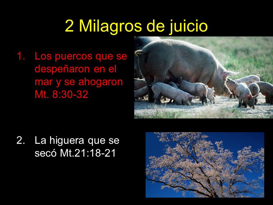 2 Milagros de juicio 1.Los puercos que se despeñaron en el mar y se ahogaron Mt. 8:30-32 2.La higuera que se secó Mt.21:18-21