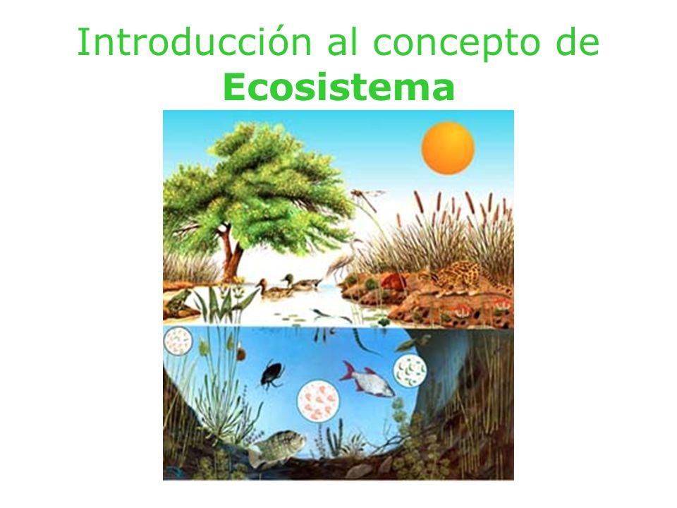 Introducción al concepto de Ecosistema