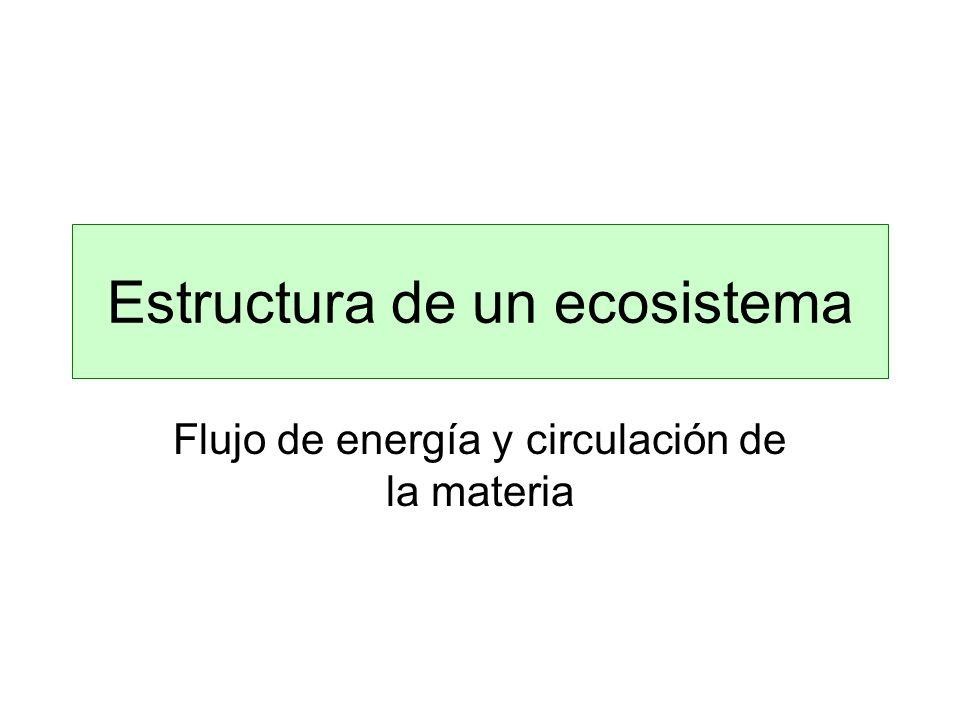 Estructura de un ecosistema Flujo de energía y circulación de la materia