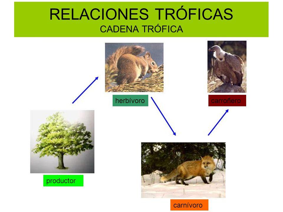RELACIONES TRÓFICAS CADENA TRÓFICA productor herbívoro carnívoro carroñero