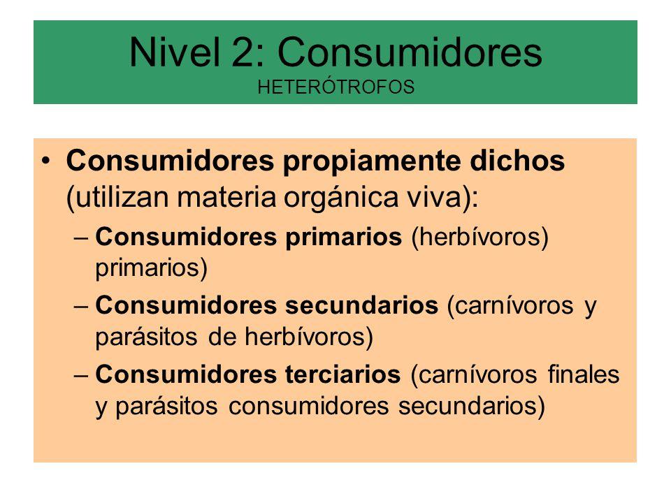 Nivel 2: Consumidores HETERÓTROFOS Consumidores propiamente dichos (utilizan materia orgánica viva): –Consumidores primarios (herbívoros) primarios) –Consumidores secundarios (carnívoros y parásitos de herbívoros) –Consumidores terciarios (carnívoros finales y parásitos consumidores secundarios)