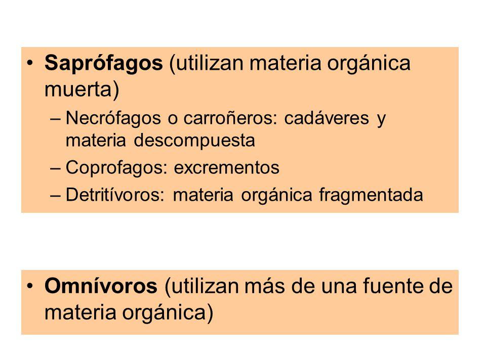 Saprófagos (utilizan materia orgánica muerta) –Necrófagos o carroñeros: cadáveres y materia descompuesta –Coprofagos: excrementos –Detritívoros: materia orgánica fragmentada Omnívoros (utilizan más de una fuente de materia orgánica)