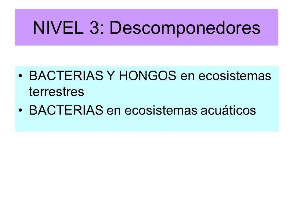 NIVEL 3: Descomponedores BACTERIAS Y HONGOS en ecosistemas terrestres BACTERIAS en ecosistemas acuáticos