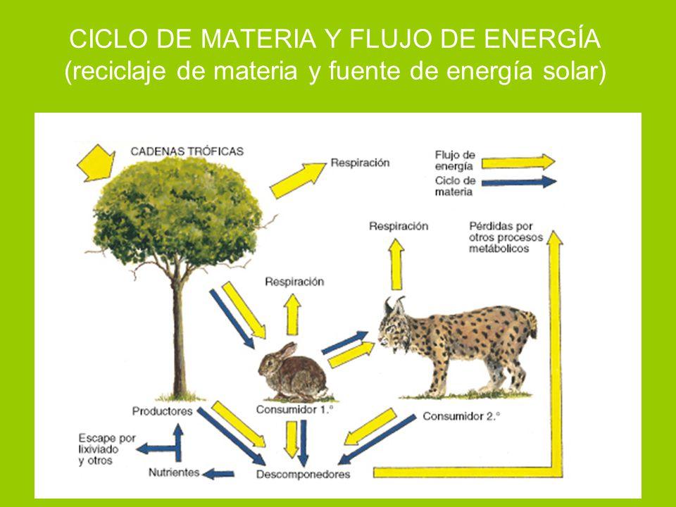 CICLO DE MATERIA Y FLUJO DE ENERGÍA (reciclaje de materia y fuente de energía solar)