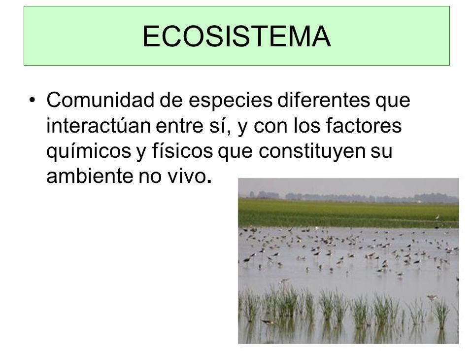 Comunidad de especies diferentes que interactúan entre sí, y con los factores químicos y físicos que constituyen su ambiente no vivo.