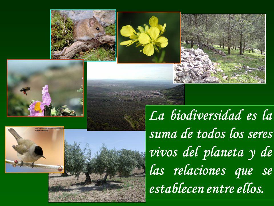 La pérdida de Biodiversidad nos afecta más de lo que podemos creer.