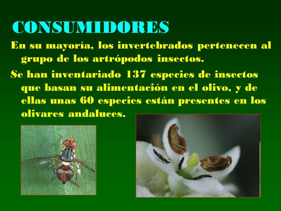 CONSUMIDORES En su mayoría, los invertebrados pertenecen al grupo de los artrópodos insectos. Se han inventariado 137 especies de insectos que basan s