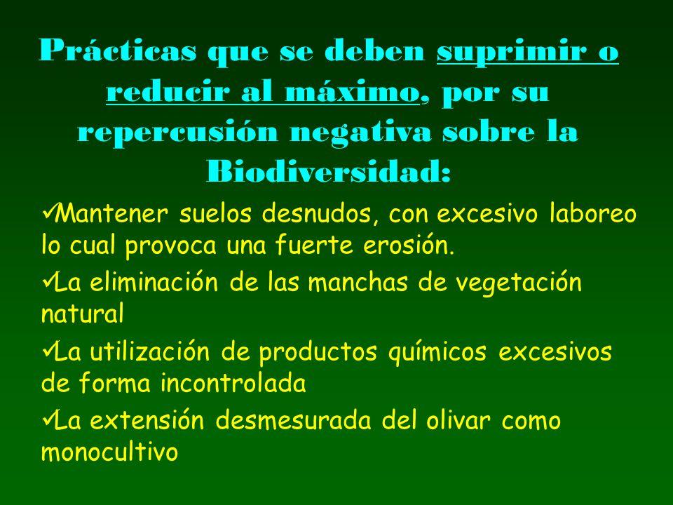 Prácticas que se deben suprimir o reducir al máximo, por su repercusión negativa sobre la Biodiversidad: Mantener suelos desnudos, con excesivo labore