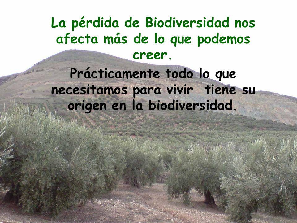 La pérdida de Biodiversidad nos afecta más de lo que podemos creer. Prácticamente todo lo que necesitamos para vivir tiene su origen en la biodiversid