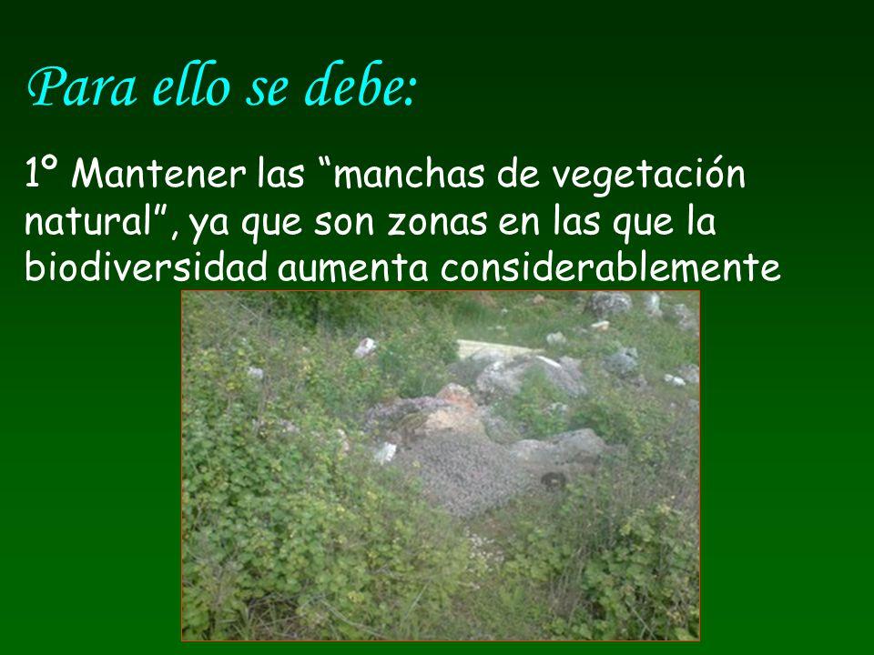 Para ello se debe: 1º Mantener las manchas de vegetación natural, ya que son zonas en las que la biodiversidad aumenta considerablemente