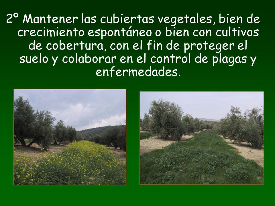 2º Mantener las cubiertas vegetales, bien de crecimiento espontáneo o bien con cultivos de cobertura, con el fin de proteger el suelo y colaborar en e