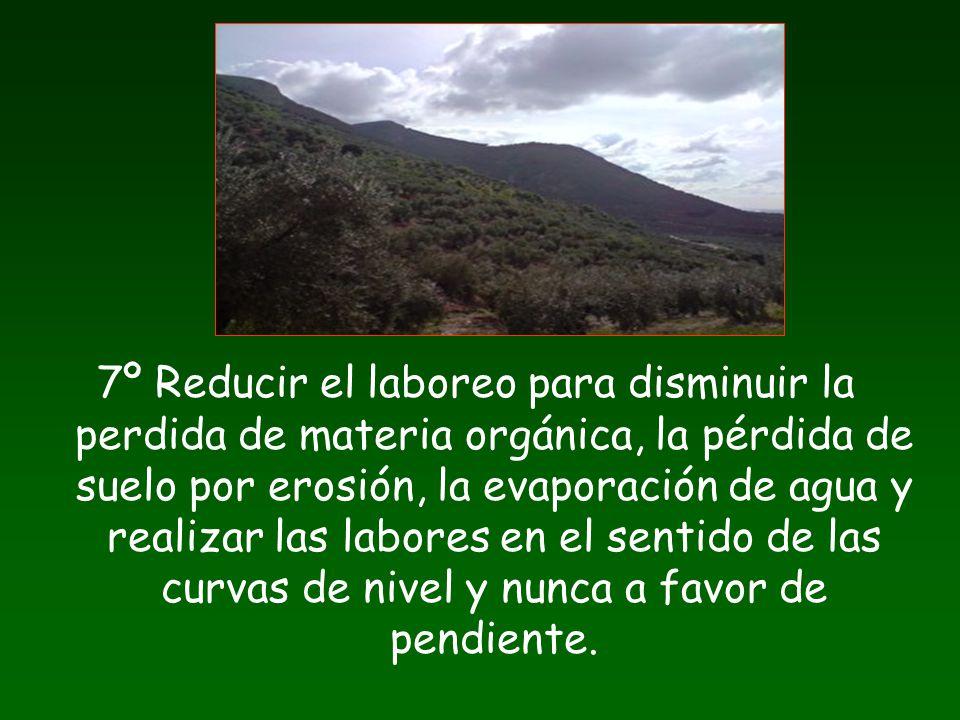 7º Reducir el laboreo para disminuir la perdida de materia orgánica, la pérdida de suelo por erosión, la evaporación de agua y realizar las labores en