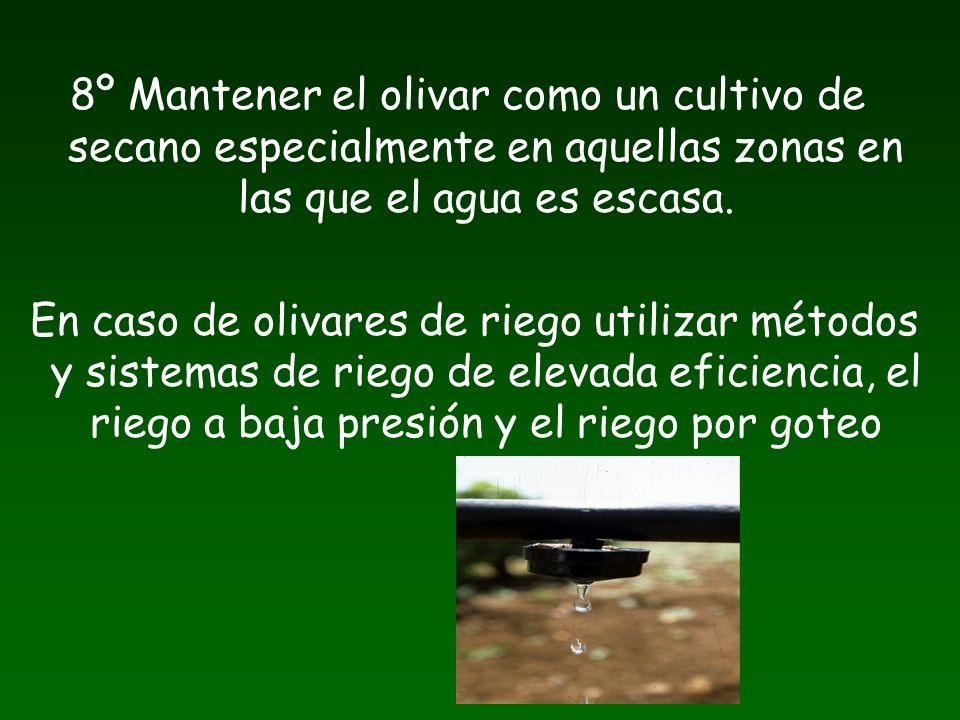 8º Mantener el olivar como un cultivo de secano especialmente en aquellas zonas en las que el agua es escasa. En caso de olivares de riego utilizar mé