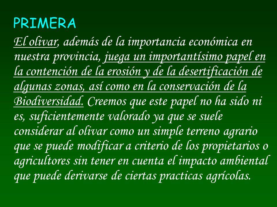 PRIMERA El olivar, además de la importancia económica en nuestra provincia, juega un importantísimo papel en la contención de la erosión y de la deser