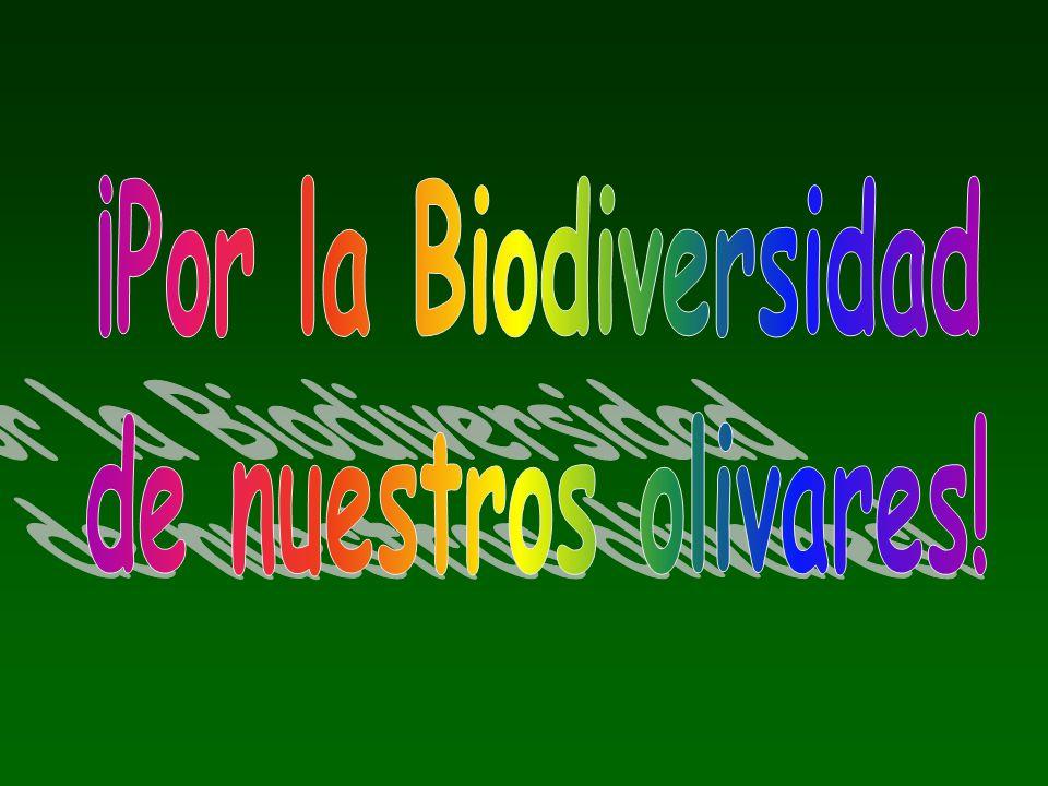 El olivar es nuestro entorno natural, lo que nos rodea y nos sustenta.