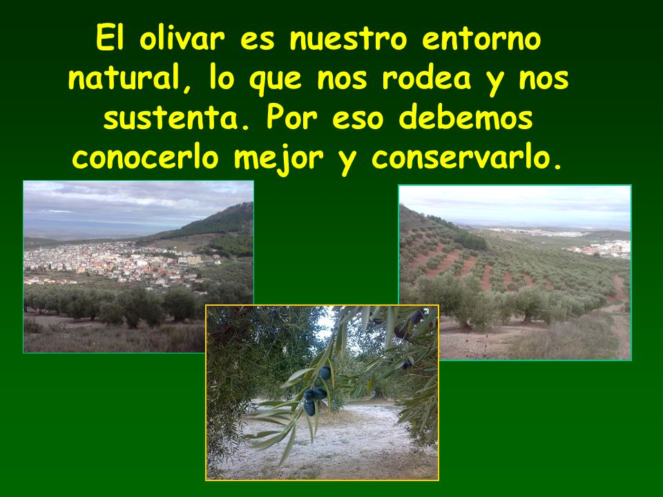 El olivar es nuestro entorno natural, lo que nos rodea y nos sustenta. Por eso debemos conocerlo mejor y conservarlo.