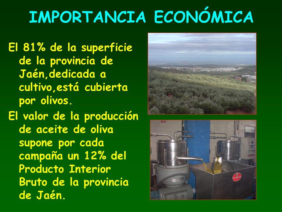 IMPORTANCIA ECONÓMICA El 81% de la superficie de la provincia de Jaén,dedicada a cultivo,está cubierta por olivos. El valor de la producción de aceite