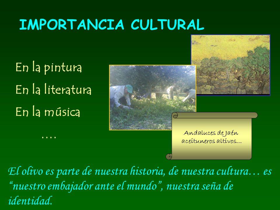 IMPORTANCIA CULTURAL En la pintura En la literatura En la música …. El olivo es parte de nuestra historia, de nuestra cultura… es nuestro embajador an