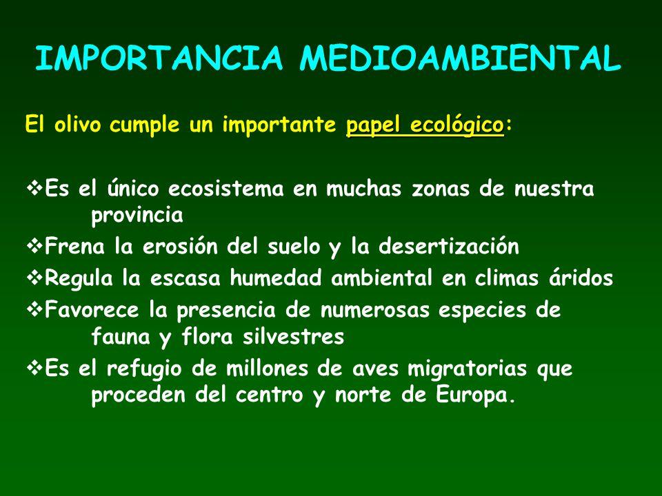 papel ecológico El olivo cumple un importante papel ecológico: Es el único ecosistema en muchas zonas de nuestra provincia Frena la erosión del suelo