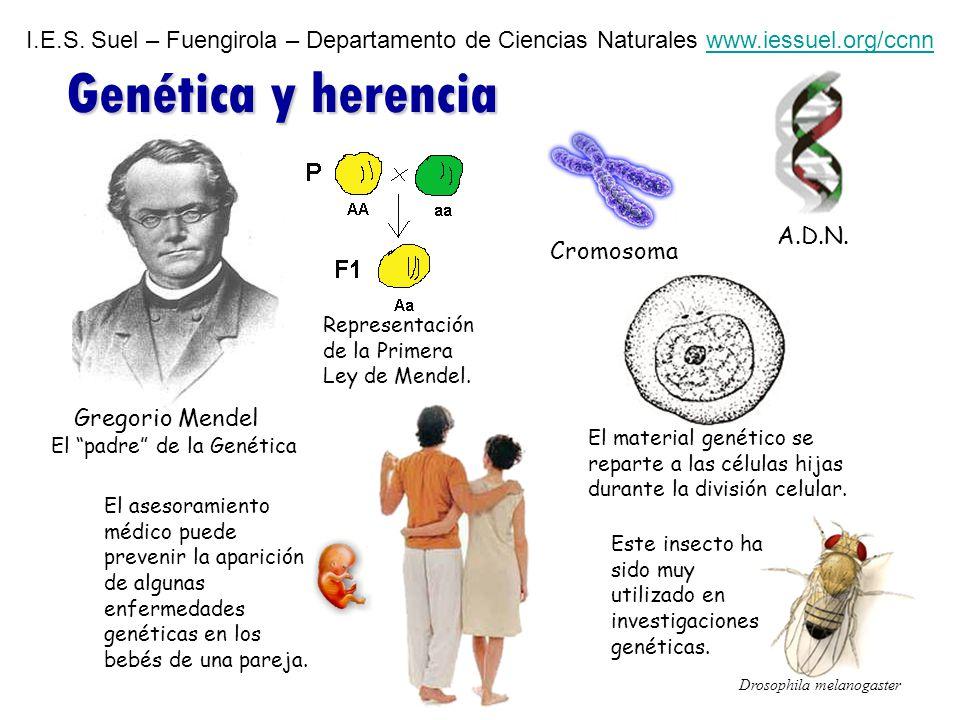 1 La herencia.