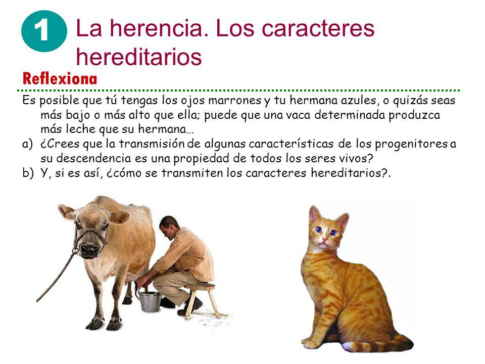 1 La herencia.Los caracteres hereditarios ¿Cómo explicas que no pueda nacer un bebé de un tomate.